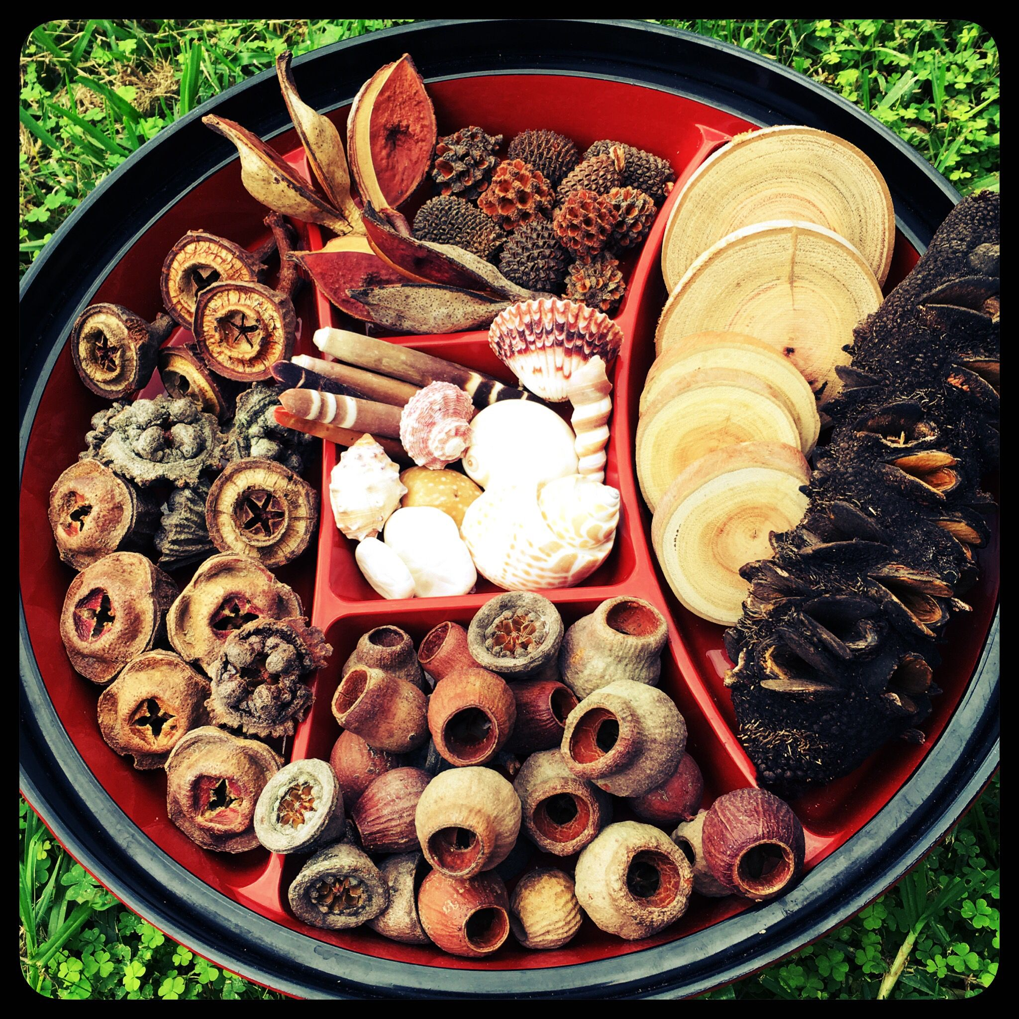 Natural Sensory Pack AU$35.00  Creating a Nature Discovery or Sensory Exploration tray for your little ones? Looking for unique natural pieces that you can't find in your local area ? Here is the perfect collection of natural resou...