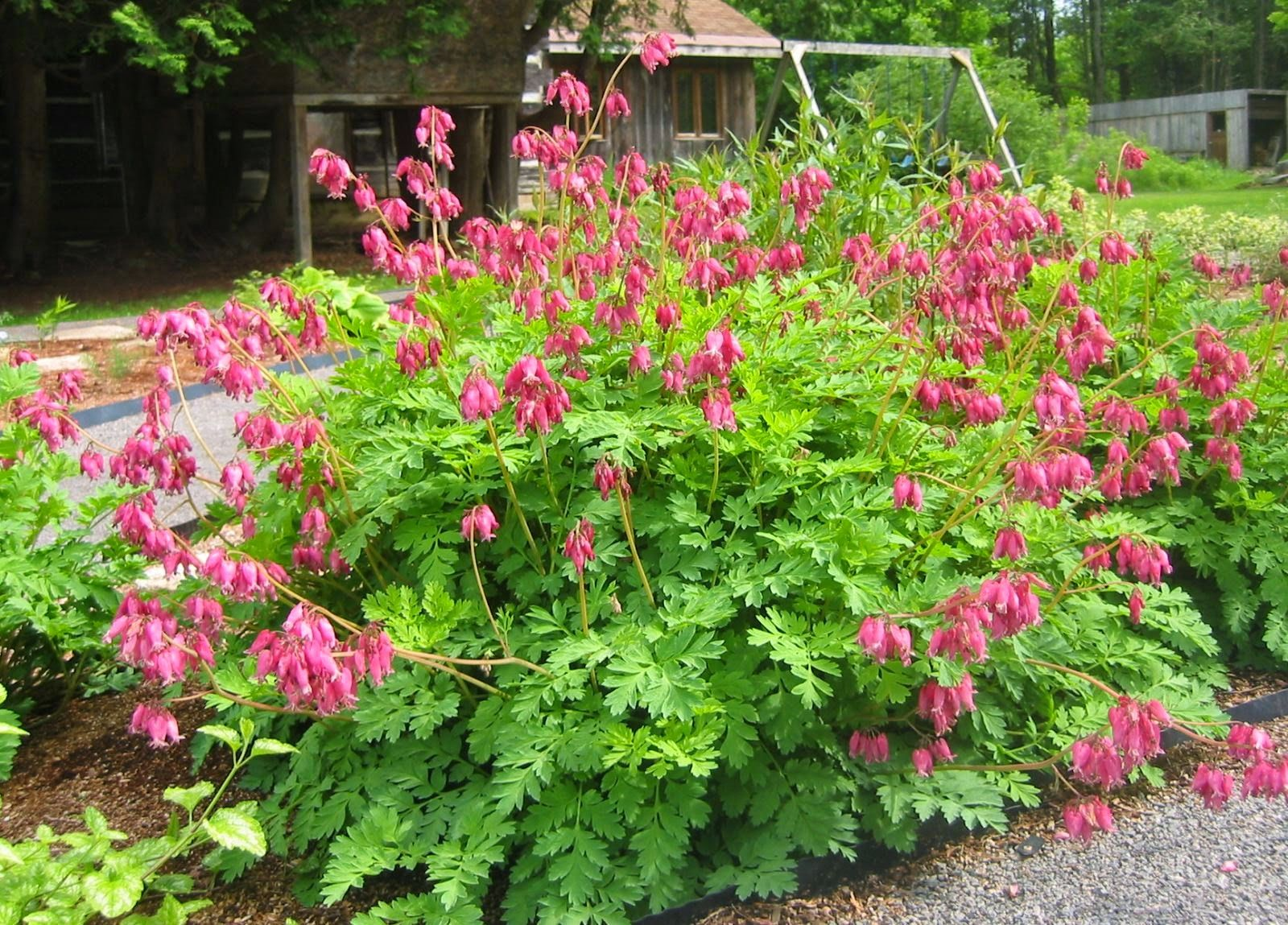 Image result for deer proof rock garden new york garden
