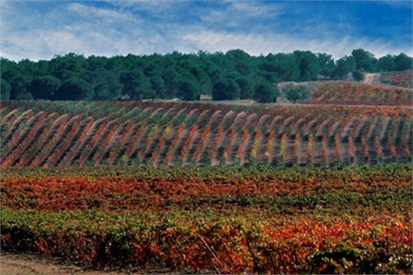 LUXURY WINERY  |  La Rioja, Spain  |  Luxury Portfolio International Member - Inmobiliaria Rimontgo