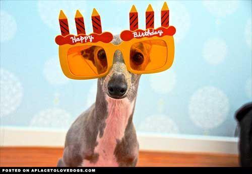 Funny Dogs Dog Birthday Wishes Happy Birthday Funny Dog Happy