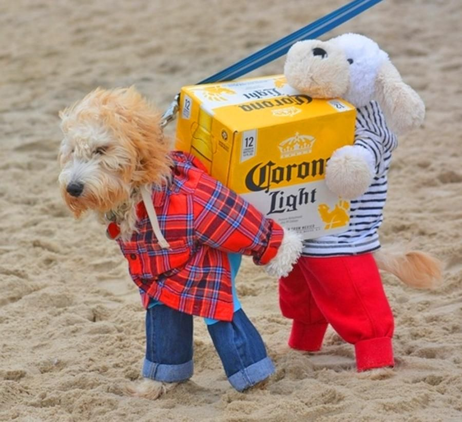 Dog Costume Carrying A Box Of Beer Best Dog Halloween Costumes