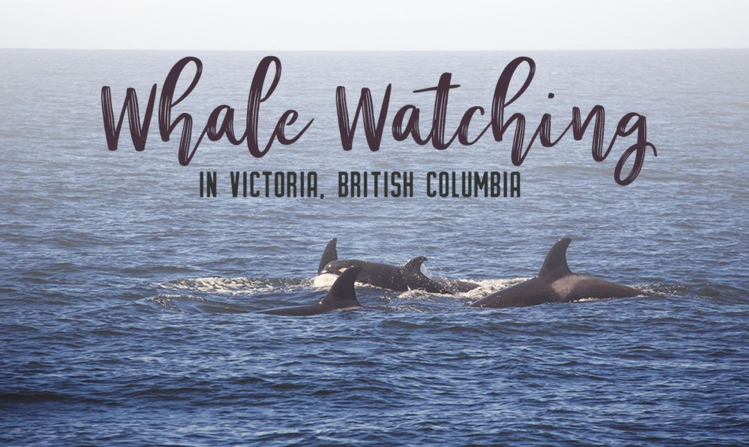 Whale Watching In Victoria Bc Whale Watching Whale Whale Watching Tours