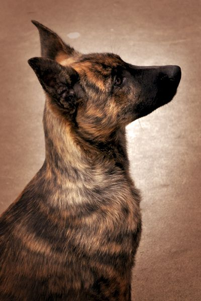 Profile by Grace Victoria, via Flickr