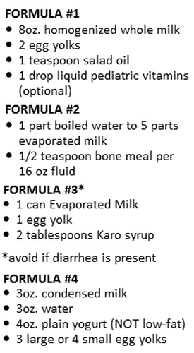 Emergency Formulas And How To Feed Kittens Kitten Formula Newborn Kittens Kitten Care