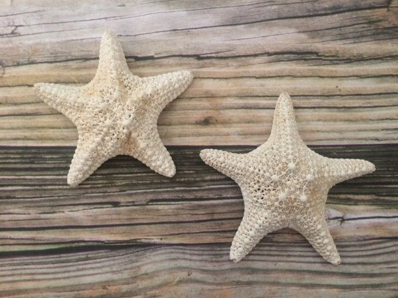 White Caribbean Starfish Wall Decor Hangings