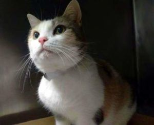 Help Us Save Nyc Ac C Shelter Cats Cat Adoption Cat Shelter Cat Today
