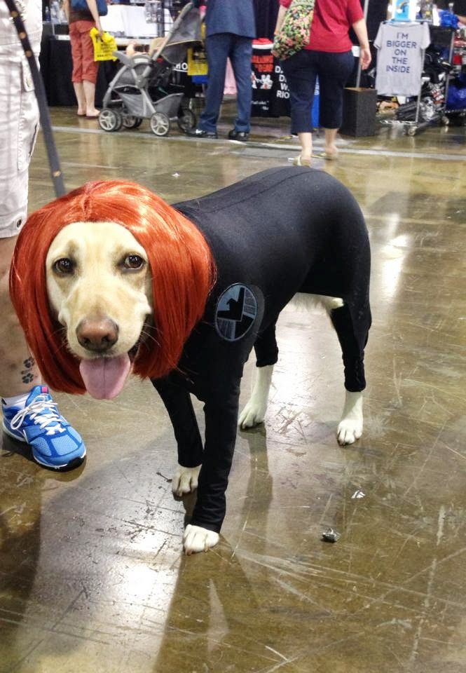 Black Widow Dog Black Widow Cosplay Best Cosplay Cosplay