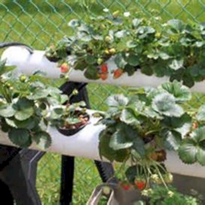 Pvc Pipe Garden. With Pvc Pipe Garden. Vertical Garden Pipe Growing ...