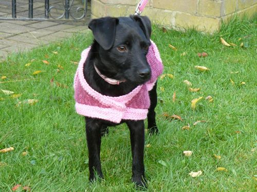 Marty's Knitted Dog Coat | Free Knitting Pattern | knitted ...