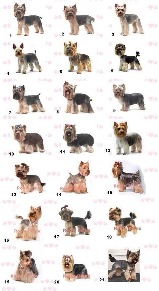 Yorkie Styles Would Love To Try Some Of These The Same Old Cut
