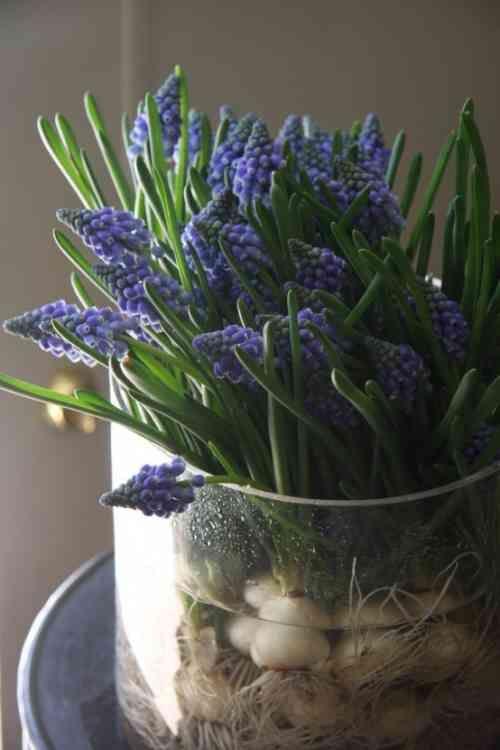 les jacinthes comme d coration de printemps inspiration pinterest jacinthe bulbes et jardins. Black Bedroom Furniture Sets. Home Design Ideas