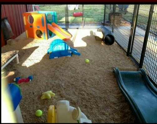 Dog And Kid Play Area