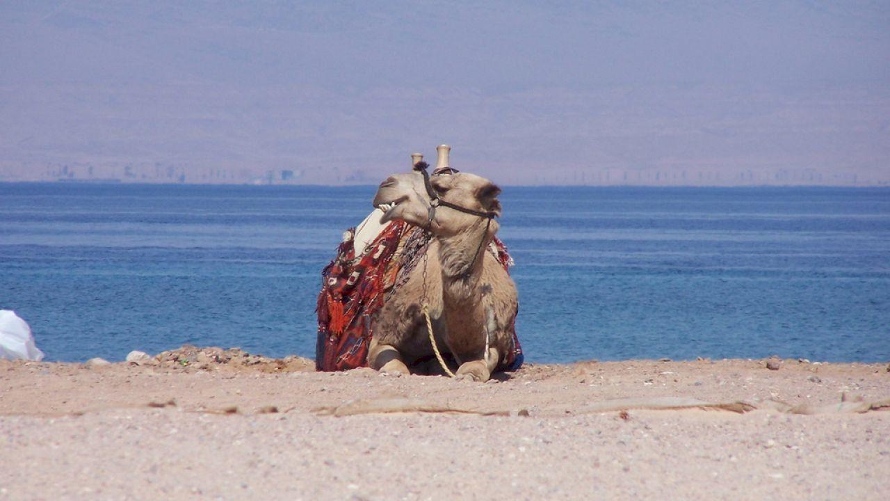 أين تقع طابا Egypt Coastal Travel