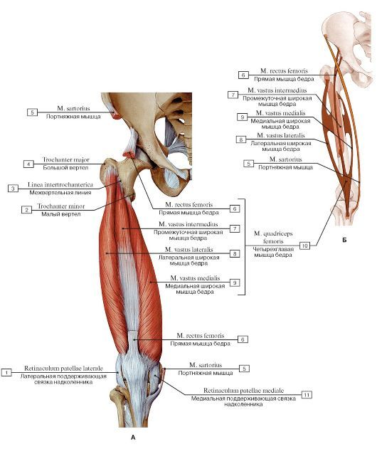 medicina ligamentelor articulare