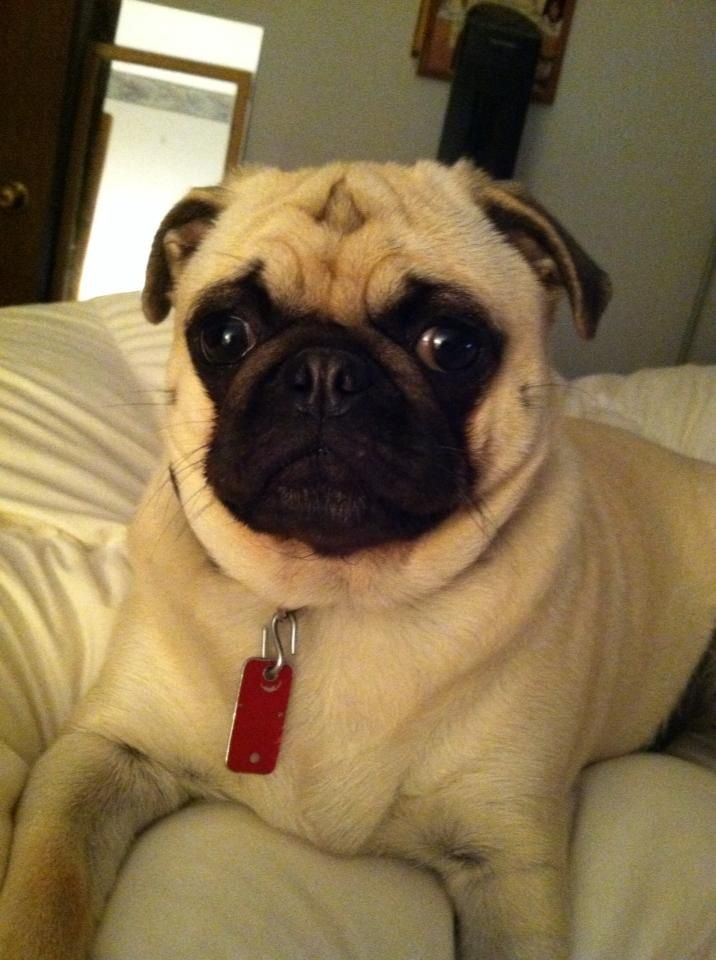 Pin on PUGTEREST