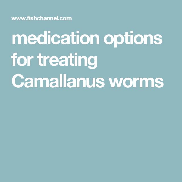 medication options for treating Camallanus worms