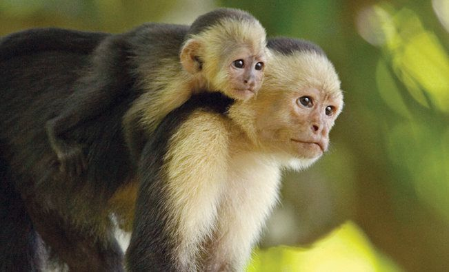 How Cute Is This Pair Of Mother And Baby Monkeys See On A Trip In