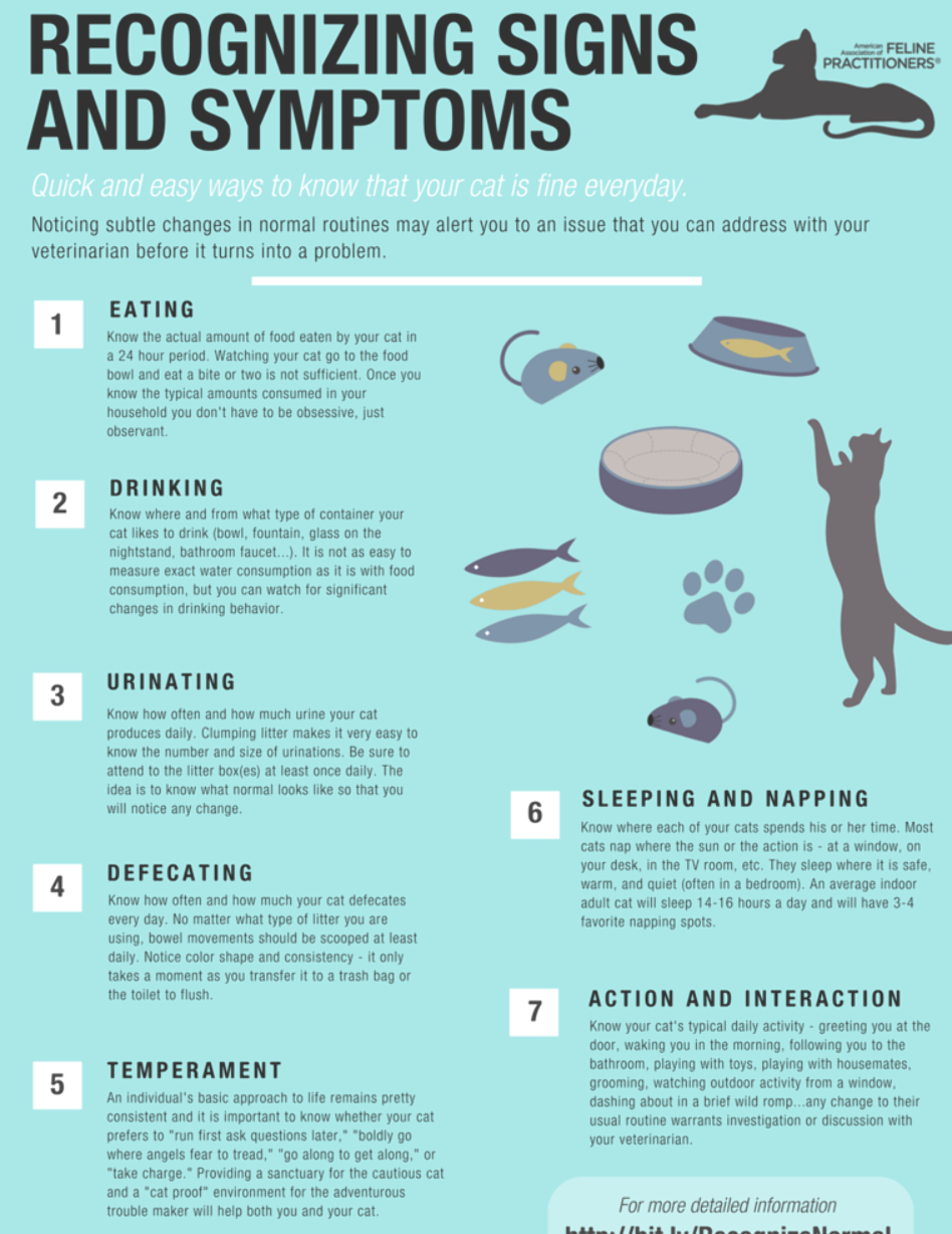 Pin By Chuck King On 1 Tigers In 2020 Cat Care Tips Cat Care Kitten Care