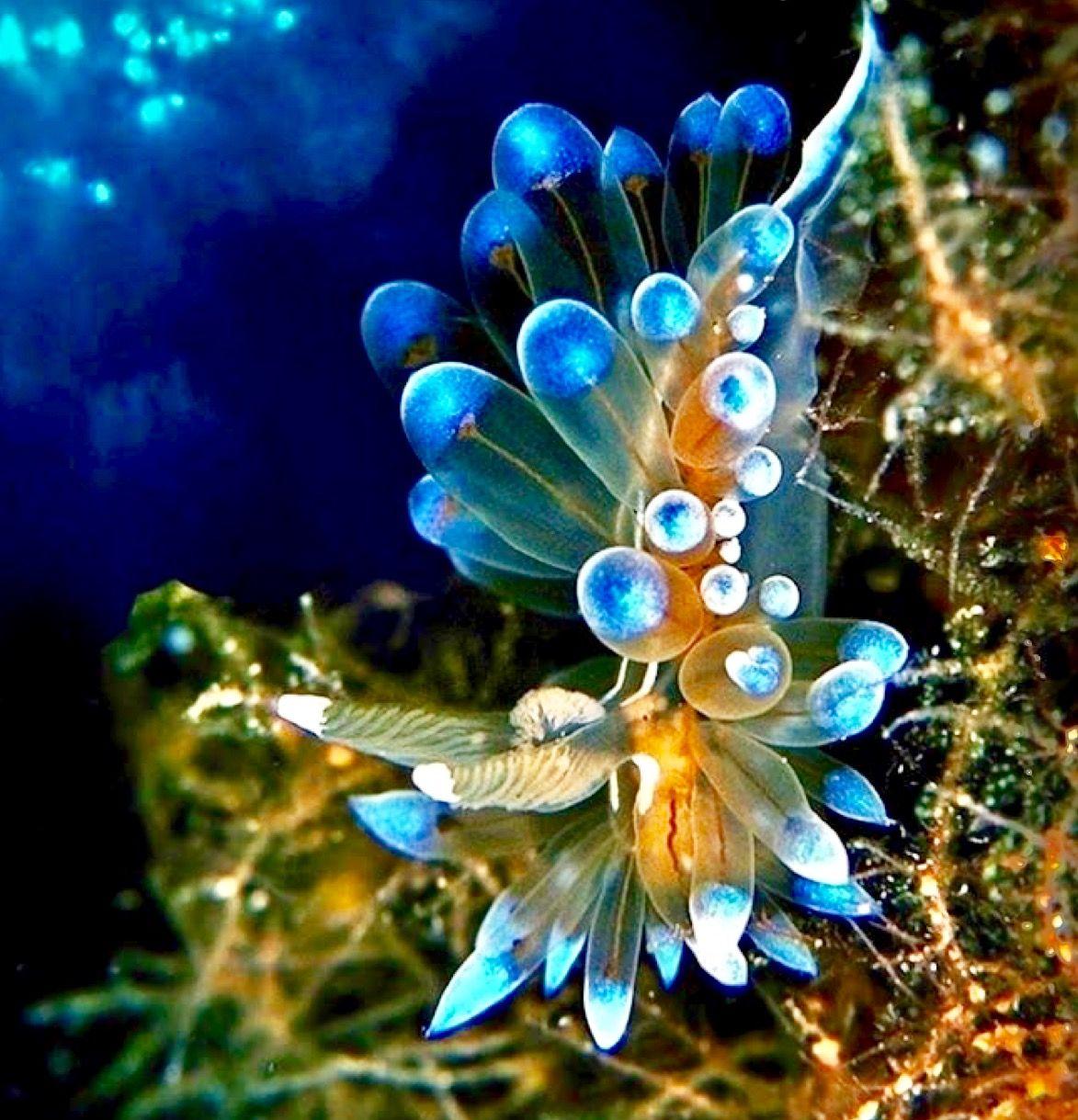 Pin de marjan hofman en Beautyful nature | Pinterest | Bajo el mar ...