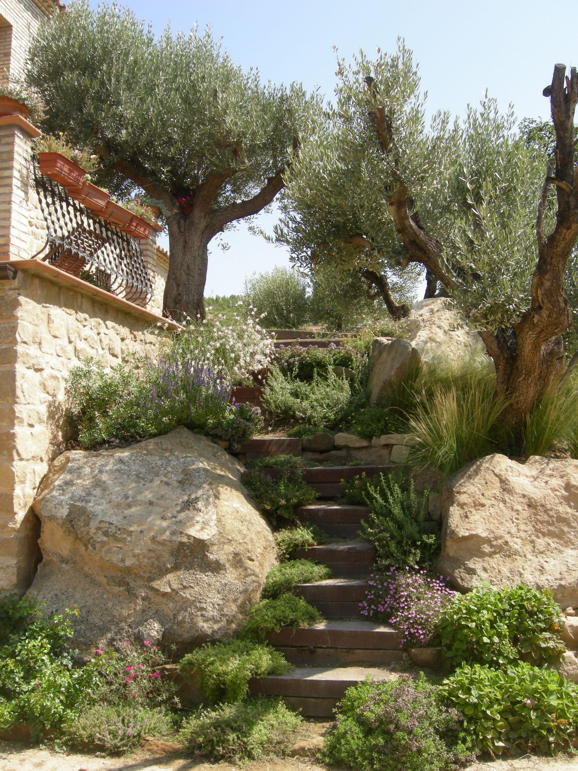 Steps. Mediterranean garden | Your Woolly Green space | Pinterest ...