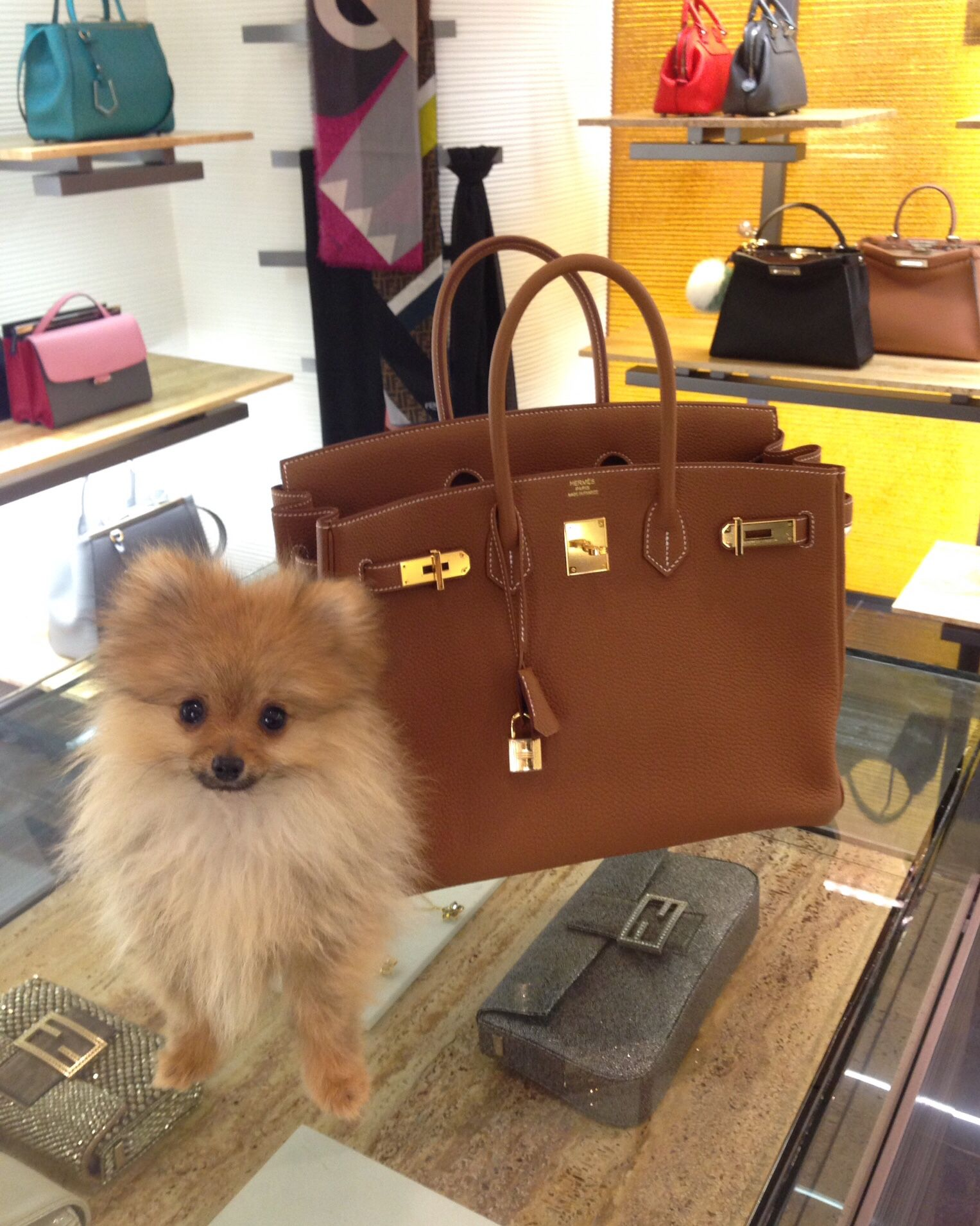 Birkin Gold 35cm Hermes My Puppy And I Doing Shopping