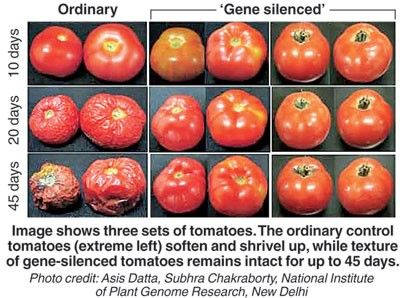 Vita Health Vita Blog Genetically Modified Food Natural Food Food