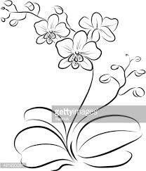 r sultat de recherche d 39 images pour orchid e dessin tatouage dessin dessin fleur et. Black Bedroom Furniture Sets. Home Design Ideas