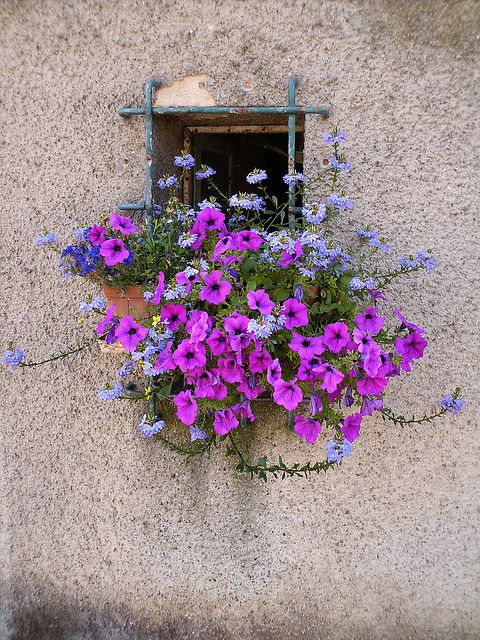 Alsace window and flowers... Flowers