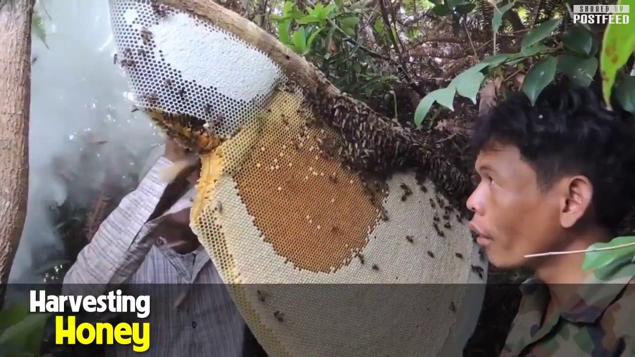 Way to get honey, Guide how to collect honey bush forest