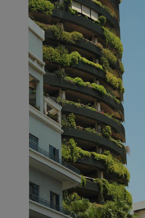 Green Pflanzen Projekte