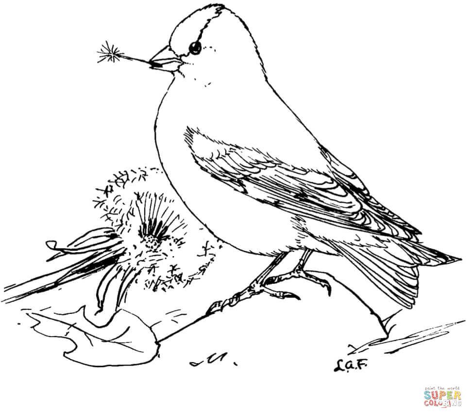 American Goldfinch Feeds Dandelion Seeds Coloring Page From