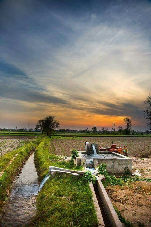 Irrigating The Fields In A Village In The Punjab Pakistan