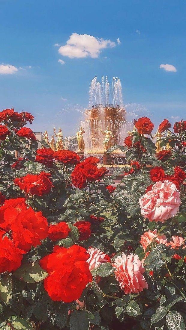 Photo of Rote Blumen Tapete #flowersbackgroundiphone Rote Blumen Tapete für Android …
