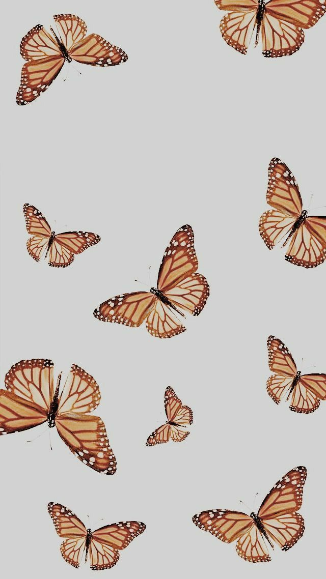 Mariposas shared by Ana Sofia on We Heart It