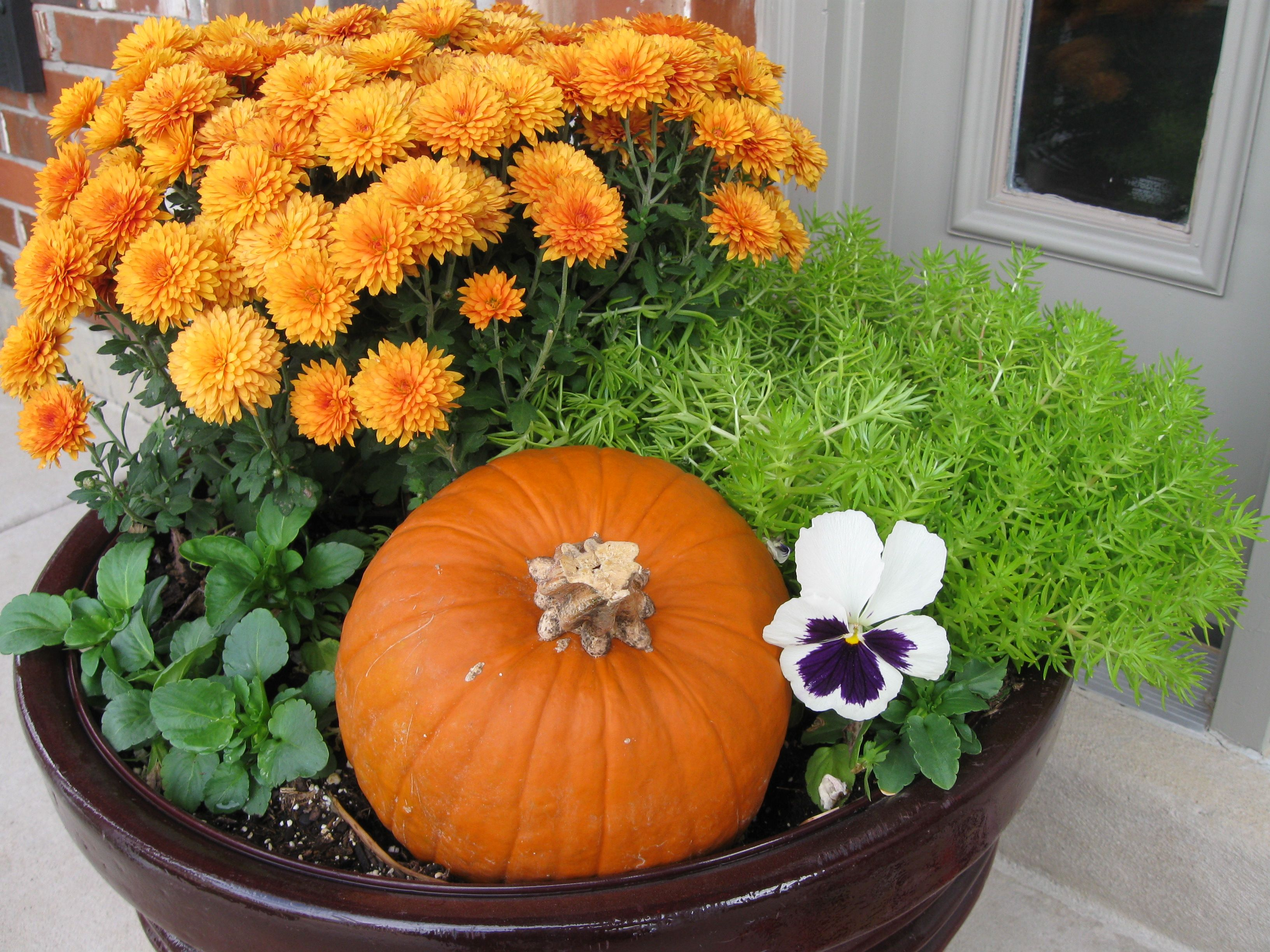 My front porch planter last Fall - it was beautiful!