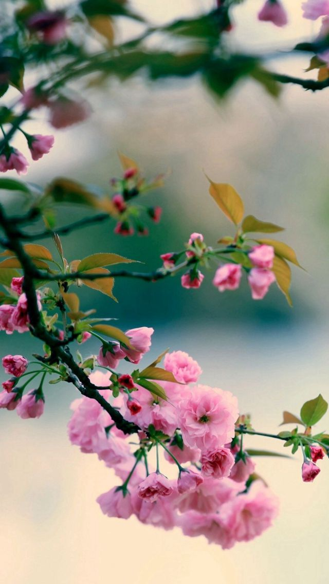 Wallpaper Iphone Spring Best 50 Free Background