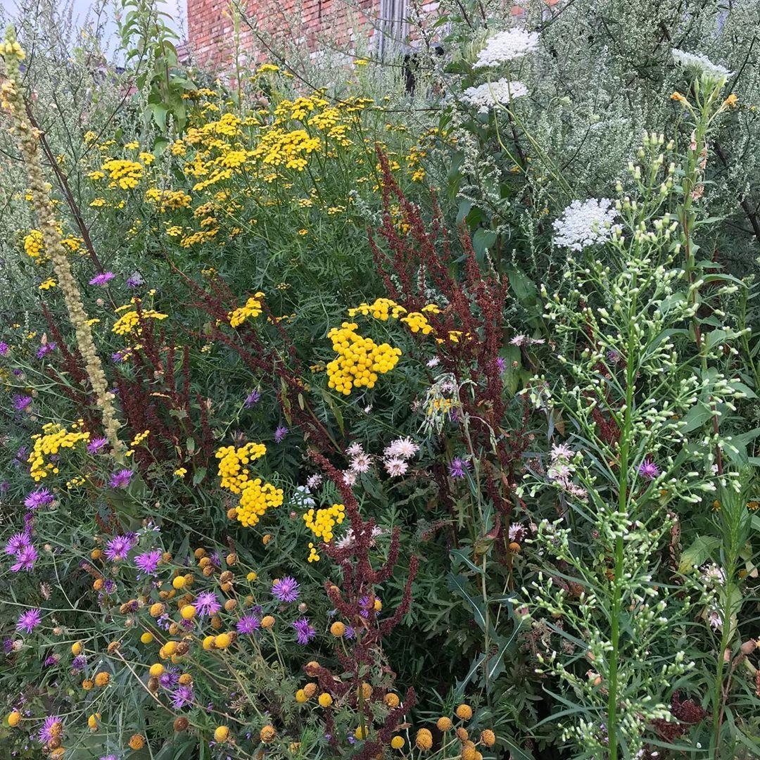 Im Sommer Imsommer Sommer Garten Bienenblumenwiese Konigskerze Garten Biologischer Anbau Konigskerze