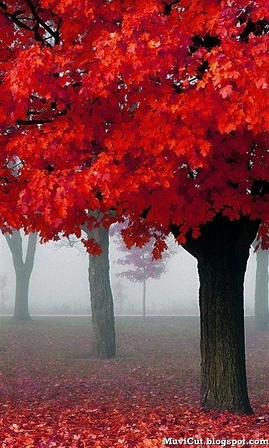 Autumn Mist, Paris I would love this as Art