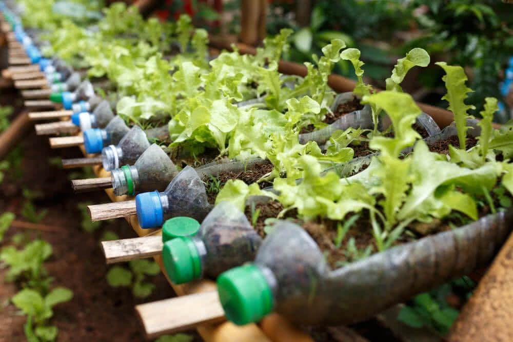 113ccf58afd8c532a84d63db54f3a0ae - How To Use Plastic Containers For Gardening