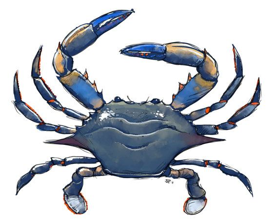 Blue Crab Digital Color Painting From A Digital Sketch Crab