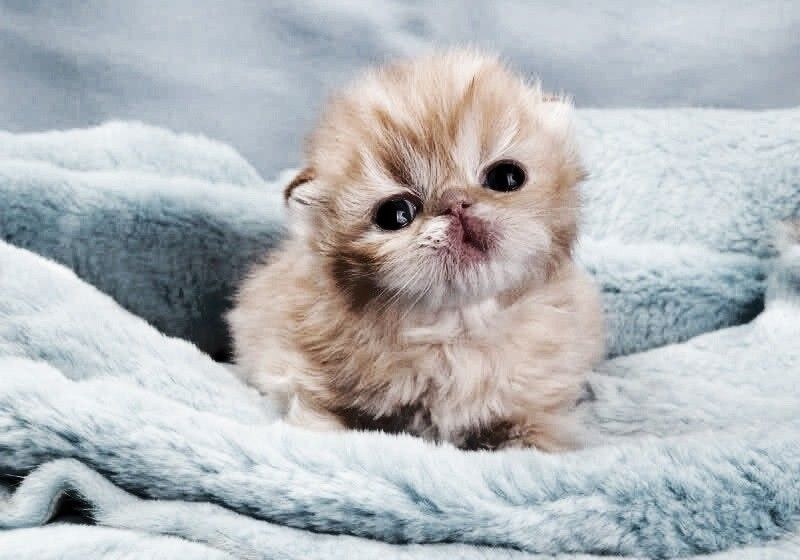 Cutee