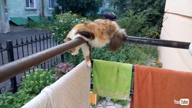 落ちそうで落ちない 猫 美猫 にゃんこ