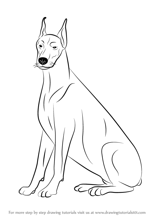 learn how to draw a doberman dogs step by step drawing tutorials