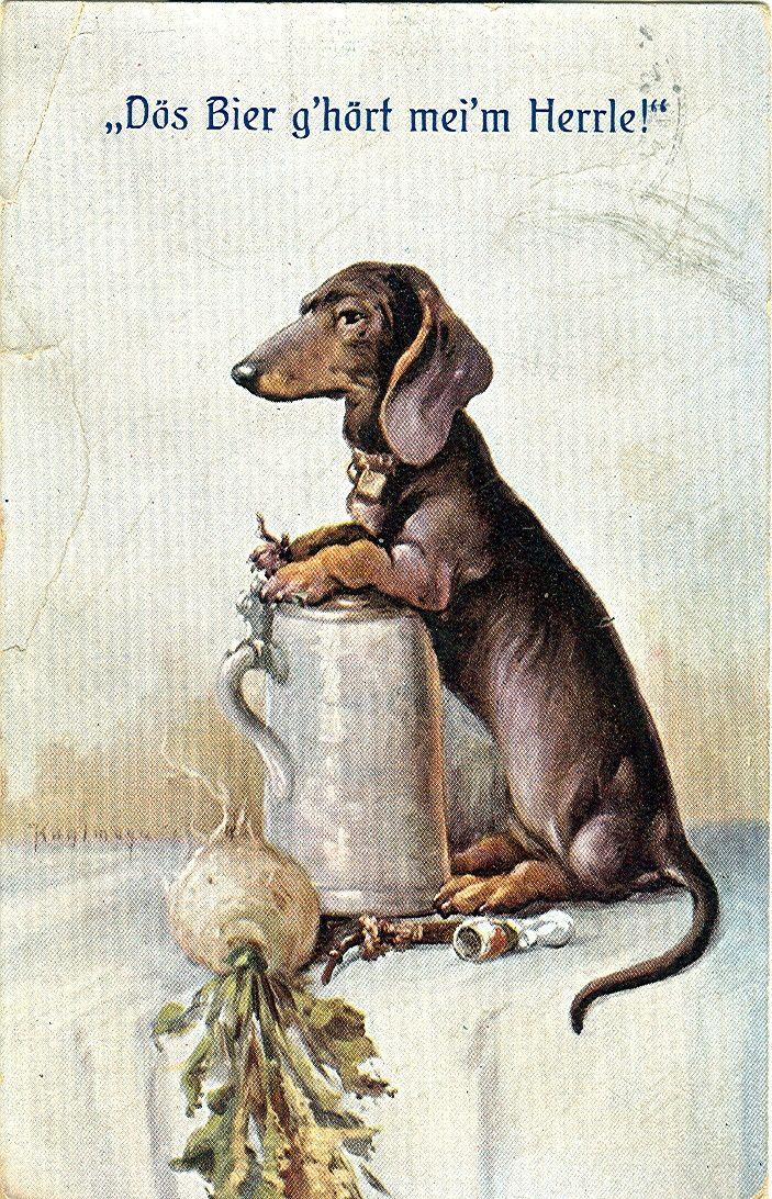 Dackel mit Bierkrug - Dachshund - Wikipedia