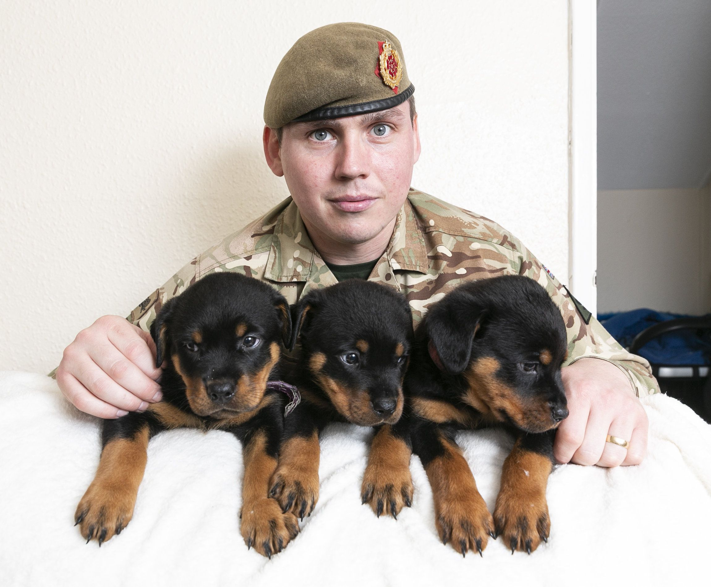 Soldier S Pet Rottweiler Gives Birth To 16 Puppies Ties Record