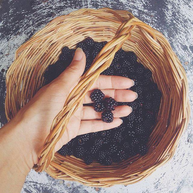 [Photo by fairyskull on Instagram] La fortuna di vivere una vita piena immersa nella #natura è anche raccogliere un cesto di #more durante una passeggiata e preparare la #marmellata! #food #homemade #jam #sweet #blackberry #fruits #frutta #instafood #vscocam #yummy #cooking #delicious #cucina #cibo