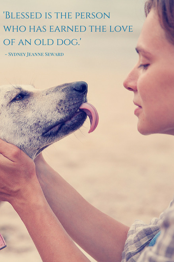Blessed Is The Person Who Has Earned The Love Of An Old Dog Sydney Jeanne Seward Dog Quotes Old Dogs Rescue Dogs