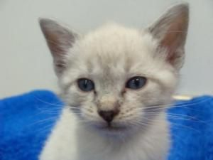 Adopt Oyster On Cute Puppies And Kittens Cute Cats Cute Animals