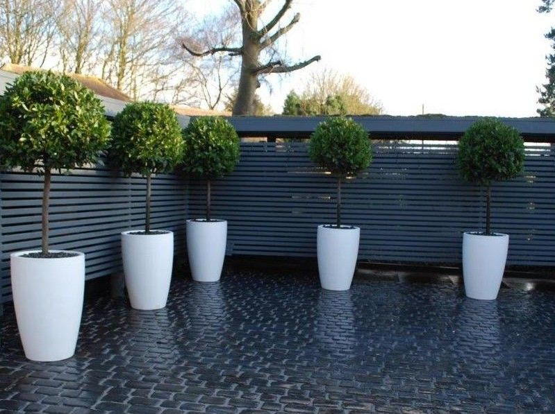 Low maintenance courtyard horizontal privacy fence for Low maintenance outside plants