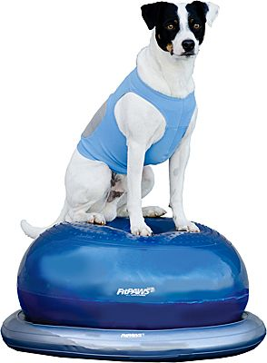 Fitpaws Donut Training Kit More Dog Toys Agility Training For